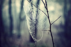 (deNNis-grafiX.com) Tags: morning november autumn trees fall nature misty fog forest spider woods mood dof nebel bokeh web herbst natur cobweb dew tau wald stimmung tropfen spinnennetz morgens morgentau