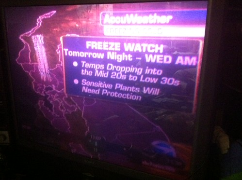 Freeze Watch