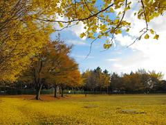一本松公園 (秋)