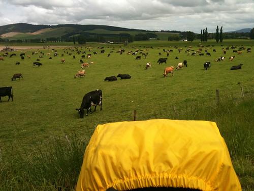 「牛密度」の高い牧場