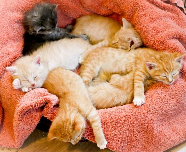 cute foster kittens sleeping napping snooze