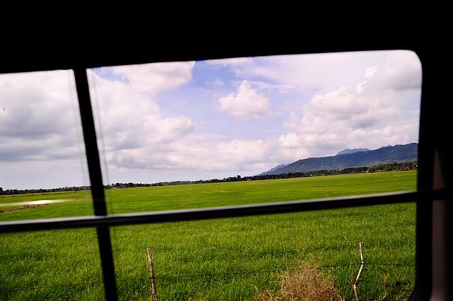 Greenery outside