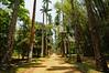 Botanischer Garten in Rio de Janeiro