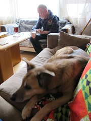 Two Old Dogs III