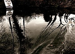 Reflections in Yeilay #3 (picnik gritty) (Tulay Emekli) Tags: travel trees vacation fall nature water creek reflections turkey reeds boat branches gritty swirl brook picnik whirl ava dere yeilay theblacksearegion