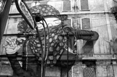 BLU & Os Gmeos (teddy.harvest) Tags: streetart portugal lens 50mm graffiti blu lisbon hp5 f18 lisbonne nikonfm nikkorais selfdevelop osgmeos ilfosol3