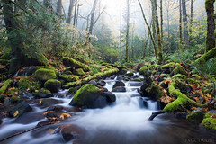 the center of diffusion... (Mac Danzig Photography) Tags: longexposure mist green oregon forest river landscape waterfall moss tnc11