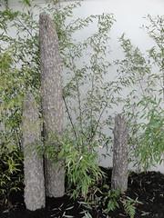 Stone Grove Bamboo