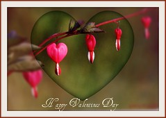Happy Valentines Day~EXPLORE #334 (clickclique) Tags: flowers card valentines wish bleedinghearts bej photosthatrock brillianteyedjewel naturescarousel joywithphotos prestigenature