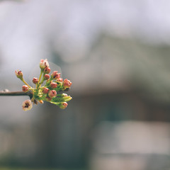 Enjoy the little things. (Jenny Hoo) Tags: plants flower blooming spring warm 植物 花 春天