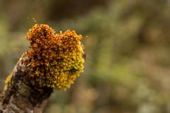 En el Páramo Cruz verde (leoocortes) Tags: verde musgo paramo naturaleza plantas