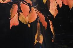 Mt Wilson 3 (trisharooni) Tags: australia autumn mtwilson breenhold