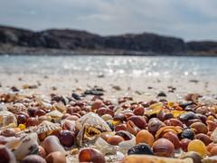 Sea Shells on a Sea Shore (Highlandscape) Tags: soundofarisaig iainmacdiarmid beach highlandscape em5 rhue sand island eileanportnammurrach portnammurrach olympusem5markii olympus httphighlandscapezenfoliocom shells