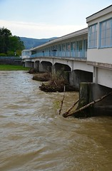 The water level is rising (stano.jas.malak) Tags: piestany slovensko slovakia water flower tree spring