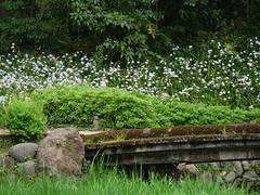 P1004247 (digitalbear) Tags: panasonic lumix gh5 sumida river kiyosumi garden eidai bridge tokyo japan sharehotel lyuro skytree fukagawameshi miyako yakatabune