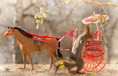 Boarding in a cart (Geert Weggen) Tags: red nature animal squirrel rodent mammal cute look closeup stand funny bright sun backlight walk tail travel departure leave missed up rise ballast holiday journey trip tour truck car drive wrongdirection sign carriage horse chariot cart flower umbrella boarding geert geertweggen hardeko sweden bispgården jämtland ragunda