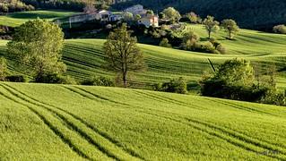 green time - campagna di Pievebovigliana - Valfornace (MC)