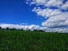 rural nature natural smartphone android snapspeed lg... (Photo: Stefan Ursachi on Flickr)