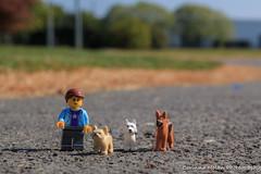 Dog Walker (corinna.nolan) Tags: lego dog walker pug westie german shepherd park bray lady