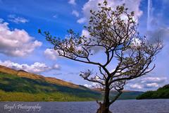 DSC_0016_Detailawm (Polleepops) Tags: argyll lochlomond lochs clouds cloudporn bridges river water hills landscape