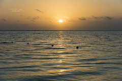 ...    calmness (mariola aga) Tags: puntacana dominicanrepublic atlanticocean ocean morning sunrise sun sky water ripples golden tones calmness thegalaxy
