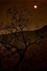 raven and molt tree (Gunawan Huang) Tags: molt tree hills mountains raven ravens sunset moon sun dry