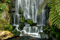 Loud splashes the water (Photography by Julia Martin) Tags: taipei taipeicity taiwan tw photographybyjuliamartin waterfall longshantemple 1652 1652texture–findyourartisticinspirationintextures–youshouldalmostbeabletofeeltheimage moss ferns youcanseegoldfish lungshantemple