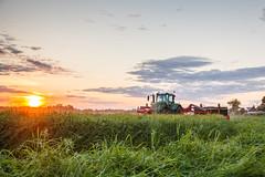 MartenSvensson_IMG_9748 (Bad-Duck) Tags: jordbruk fendt kalmarlantmän kväll livsmedel livsmedelsproduktion slåtterkross solnedgång traktor vall vallskörd öland