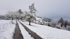 End Of April - Austria (Been Around) Tags: europeanunion april aprilsnow snow neuschnee newsnow spring tree trees baum wiese meadow magdalenaberg kremstal morning eu europe europa autriche inzersdorf inzersdorfimkremstal oberösterreich upperaustria österreich austria