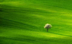 Green.... (emanuelezallocco) Tags: green spring italy nature landscape vibrant beauty simply simplicity beautiful