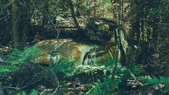 return to nature (Marty Hogan) Tags: deltacounty michigan abandonedcar junkcar oldsmobile rocket88