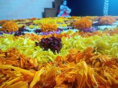 IMG_20160914_093603 (bhagwathi hariharan) Tags: onam pookalam flower rangoli kolam carpet floral nalasopara nallasopara virar aathapookalam tiruonam