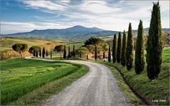 Toscana - Val d'Orcia (Luigi Alesi) Tags: toscana italia italy tuscany siena vsl dorcia san quirico paesaggio landscape scenery strada road way alberi trees country countryside natura nature nikon d750 raw