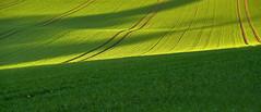 Captured the last Light...Rural Scenery (W_von_S) Tags: light licht feld field gras grass landscape landschaft rural green grün linien lines wvons werner sony outdoor ebersberg bavaria bayern schatten shadow agriculture ländlich landwirtschaft spring frühling