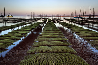 Oyster farm #explore
