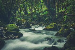 The small Amazonia