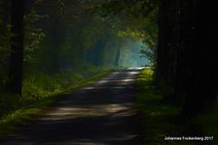Schattenwald (grafenhans) Tags: sony alpha 68 a68 ilce wald weg waldweg grafenwald tamron 5663200400