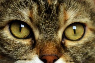 Alice's eyes...