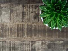 table_stock_plant (AnteKante) Tags: stock pflanze rustikal topf minimalistisch holz stockfotografie braun stilleben tisch