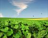 Sunflower field (Katarina 2353) Tags: vojvodina serbia katarina2353 katarinastefanovic