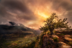 Sunset in Sierra de Gador, Alcora, Almeria, Spain (dleiva) Tags: field sky landscape nature tree plant grass spain mountain day photography andalusia outdoors horizontal scenics tranquility color image no people almeria sierra cloud dleiva domingo leiva carob rock object