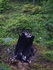 nasıl yandın ağaç?