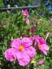 IMG_3305 (reuse) Tags: mayflowers