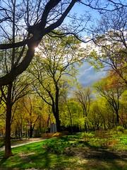 Québec: 300 localités en situation d'urgence / l'armée en renfort (BLEUnord) Tags: montréal parc park lafontaine arbres trees mai may 2017 ciel sky