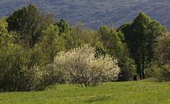 Primavere (lincerosso) Tags: bosco boscomesofilo boscodicaducifoglie stagioni primavera tonalitàverdi dominanticromatiche paesaggio landscape bellezza armonia slovenia