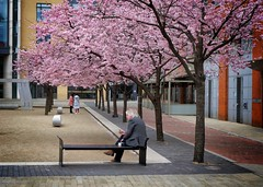 A place to sit (halifaxlight) Tags: england birmingham downtown centre square trees blossoms pink women sitting eating looking urban bench man