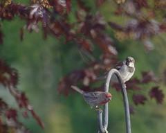 IMGP4422b (forfiv) Tags: digital color pentaxkx tamron28200mm bird grandcoulee wa