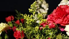 #photography #canon700d #istanbul #bahar #spring #flowers #flower #snapseed  #çiçek #colorofspring #colourful #red #white #yellow (oppeslife) Tags: çiçek snapseed colourful flower photography bahar white colorofspring red spring canon700d istanbul yellow flowers