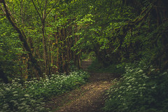 Peacefull walk (Chloé +++) Tags: forest forêt trees tree arbres walk chemin path green vert yellow brown white flowers flower magic nature natural outside leaf plants paysage landscape may springtime printemps europe france pyrénées midipyrénées occitanie gourgue dasque 65 dof depthoffield canon eos 50mm