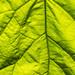 Bug+enjoying+the+sun+on+a+leaf